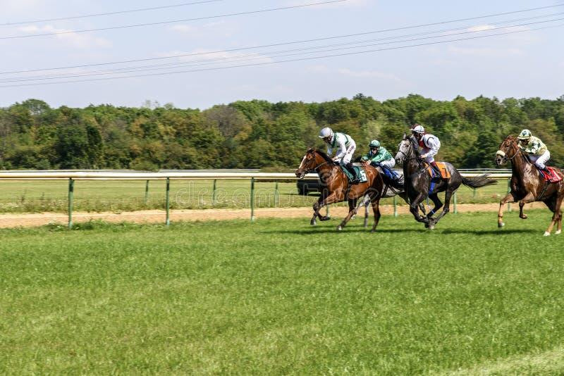 Vier ruiters die paarden rennen galop stock foto's
