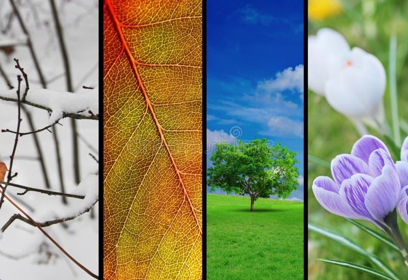 Vier seizoenen stock foto's