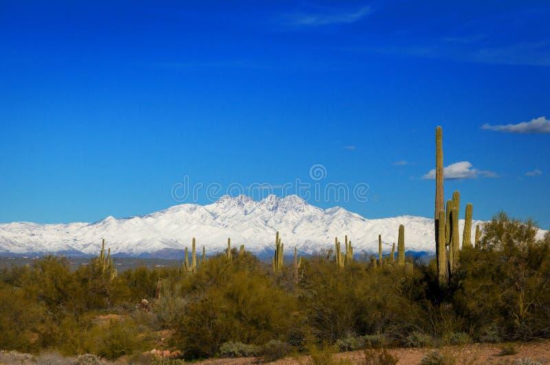 Vier Spitzen-Berge, die im Schnee in Arizona mit Kaktus und Wüste bedeckt werden, bürsten im Vordergrund stockfoto