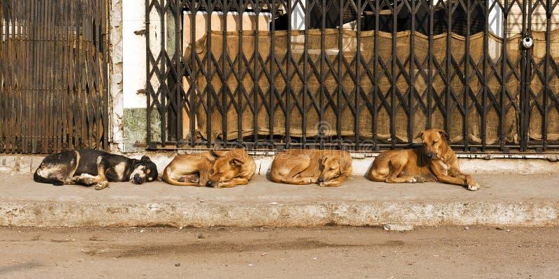 Vier straathonden royalty-vrije stock foto