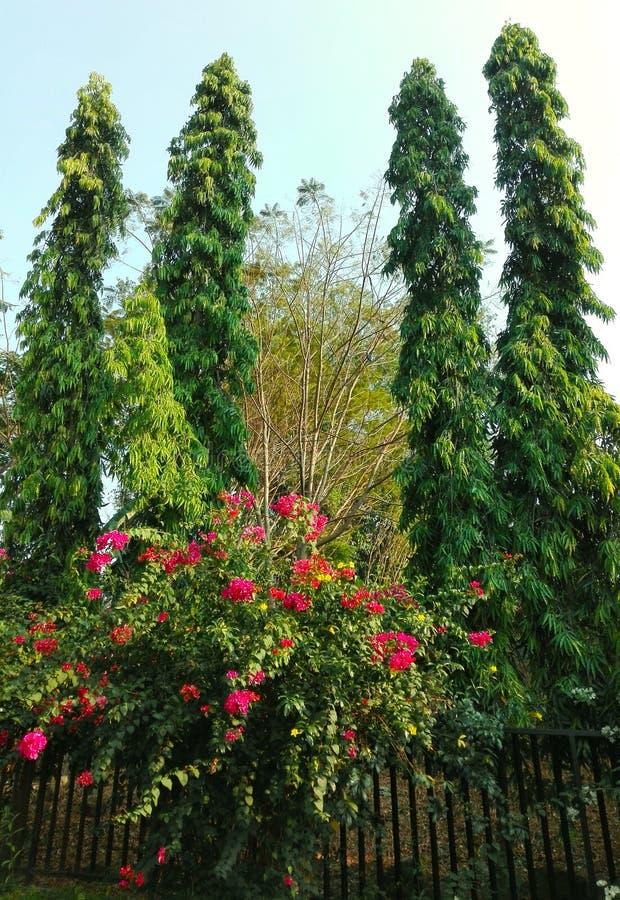 Vier Torenbomen royalty-vrije stock afbeeldingen