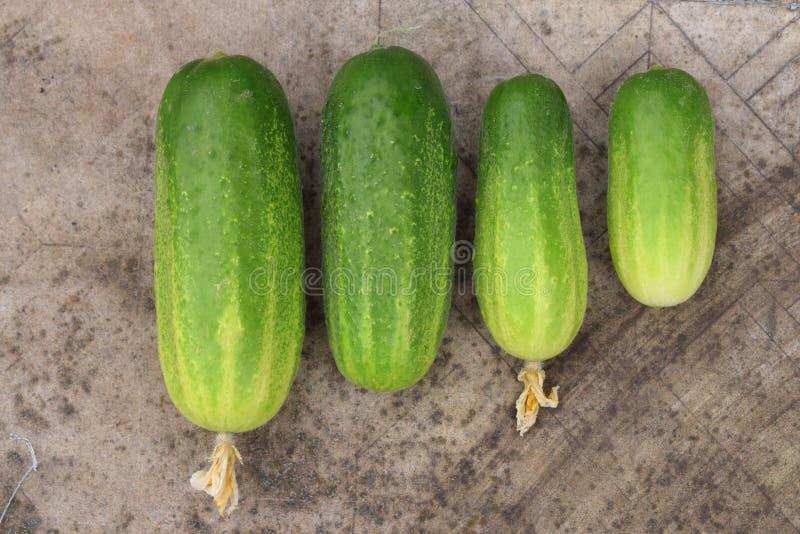 Vier verse groene komkommers met bloemenoogst royalty-vrije stock foto's