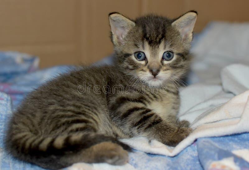 Vier week oud katje stock afbeeldingen