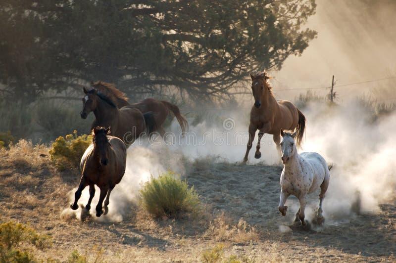 Vier Wild paarden royalty-vrije stock afbeelding
