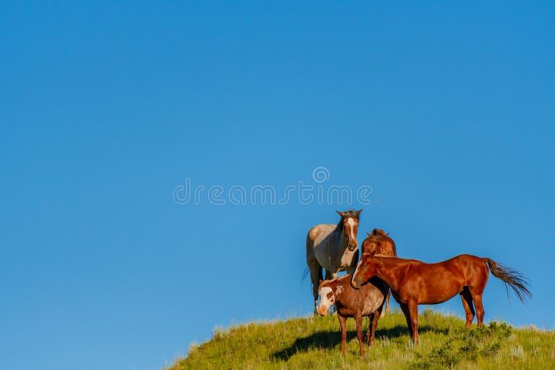Vier wilde Pferde auf blauem Himmel stockfotografie