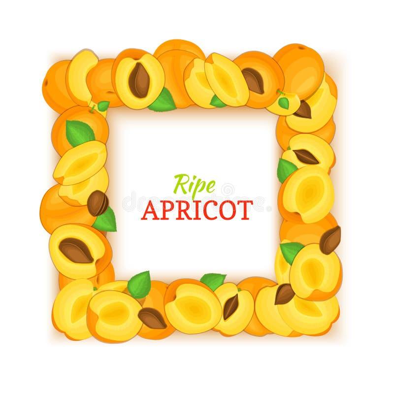Vierkant die kader uit heerlijk abrikozenfruit wordt samengesteld Vectorkaartillustratie Het kadervruchten van de rechthoekperzik royalty-vrije illustratie