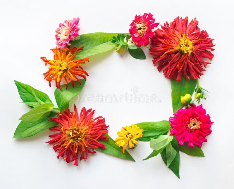 Vierkant die kader van bladeren, bloemen en knoppenzinnias wordt gemaakt in diffe stock foto