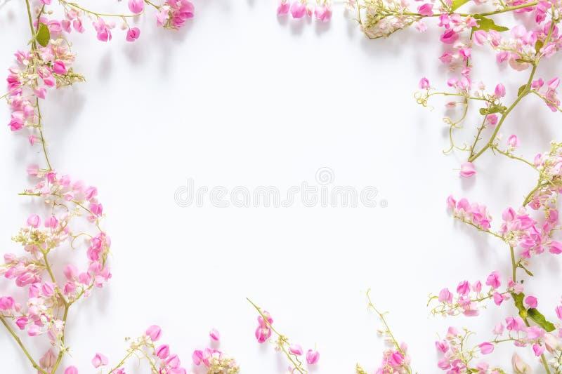 Vierkant grenskader met roze bloem, takken en bladeren die op witte achtergrond met exemplaarruimte wordt geïsoleerd Vlak leg, ho royalty-vrije stock foto