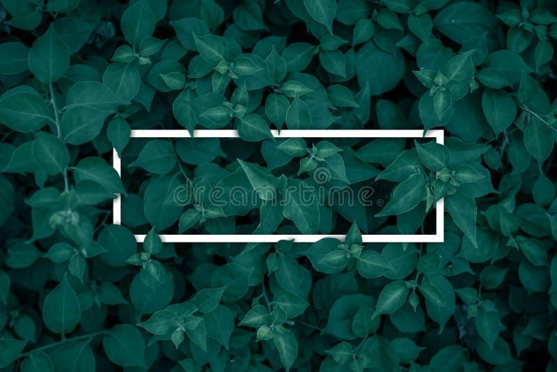 Vierkant kader, Spatie voor de reclame van kaart of uitnodiging royalty-vrije stock foto