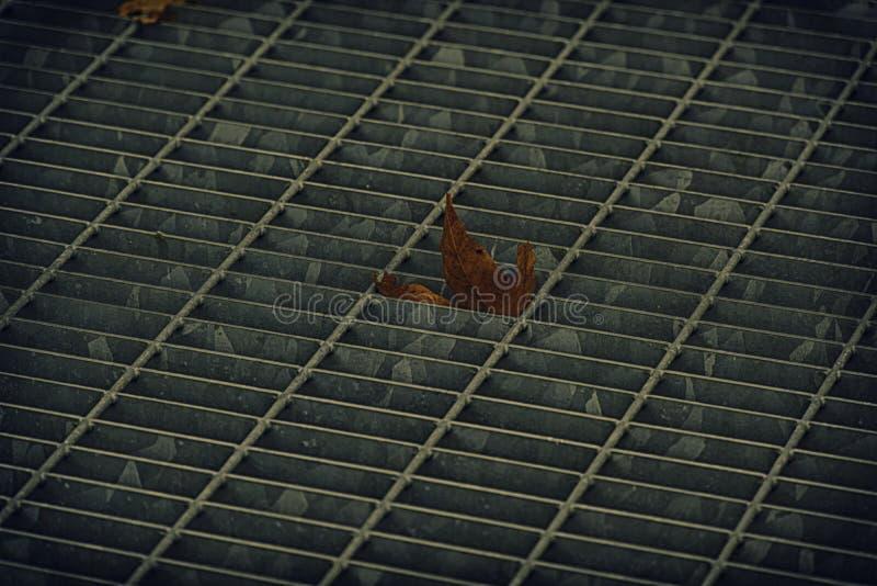 Vierkant metaalbroedsel in stedelijke bestrating, de dekking van het rioolmangat met binnen het merken van lijnen en blad stock afbeeldingen