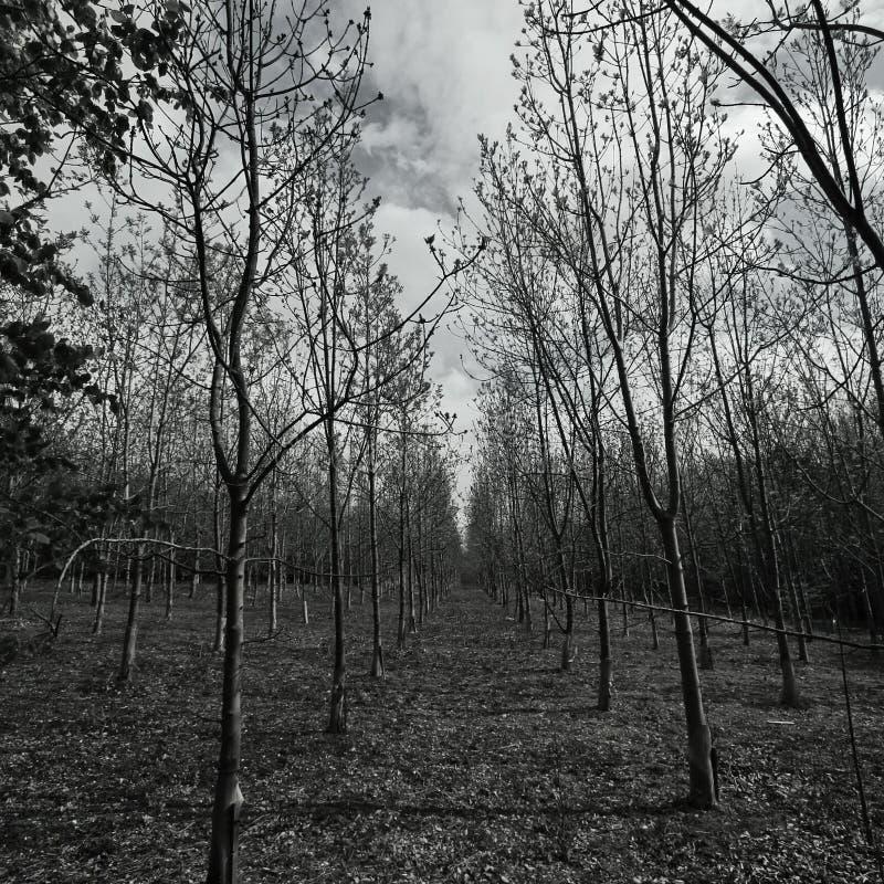 Vierkante Bomen stock fotografie