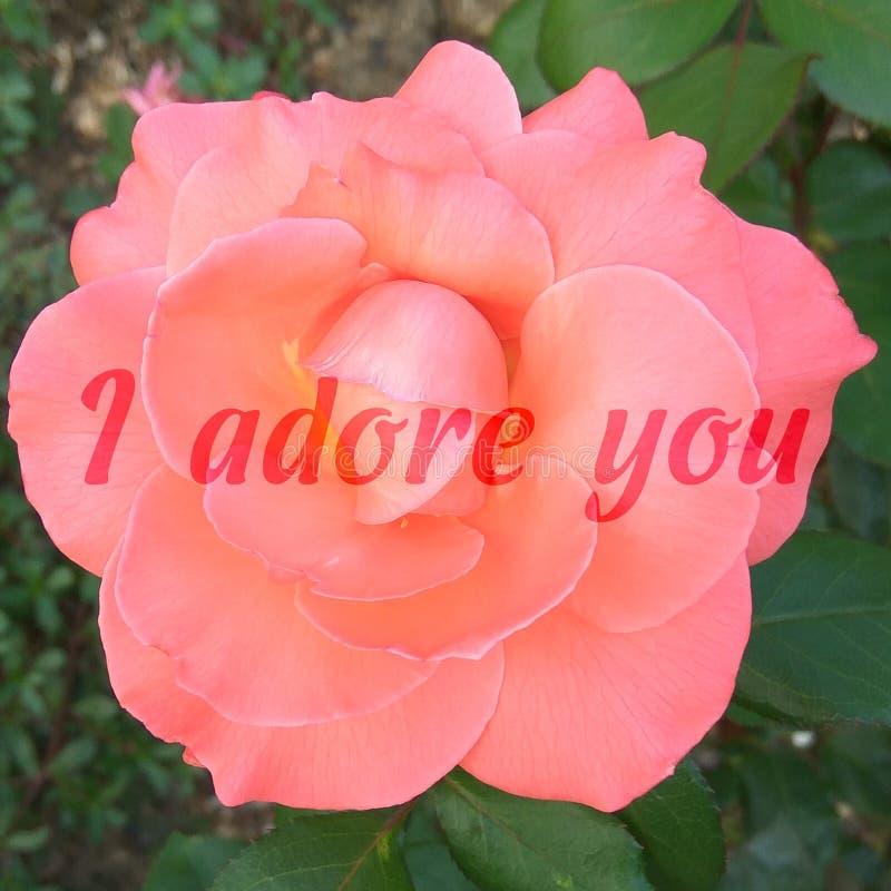 Vierkante kaart met een foto van een roos en de woorden aanbid ik u stock foto