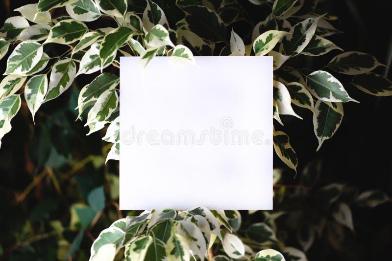 Vierkante papper op de achtergrond van groene bladeren van tropische installaties Prentbriefkaar op het thema van aard Tekstkader royalty-vrije stock afbeelding