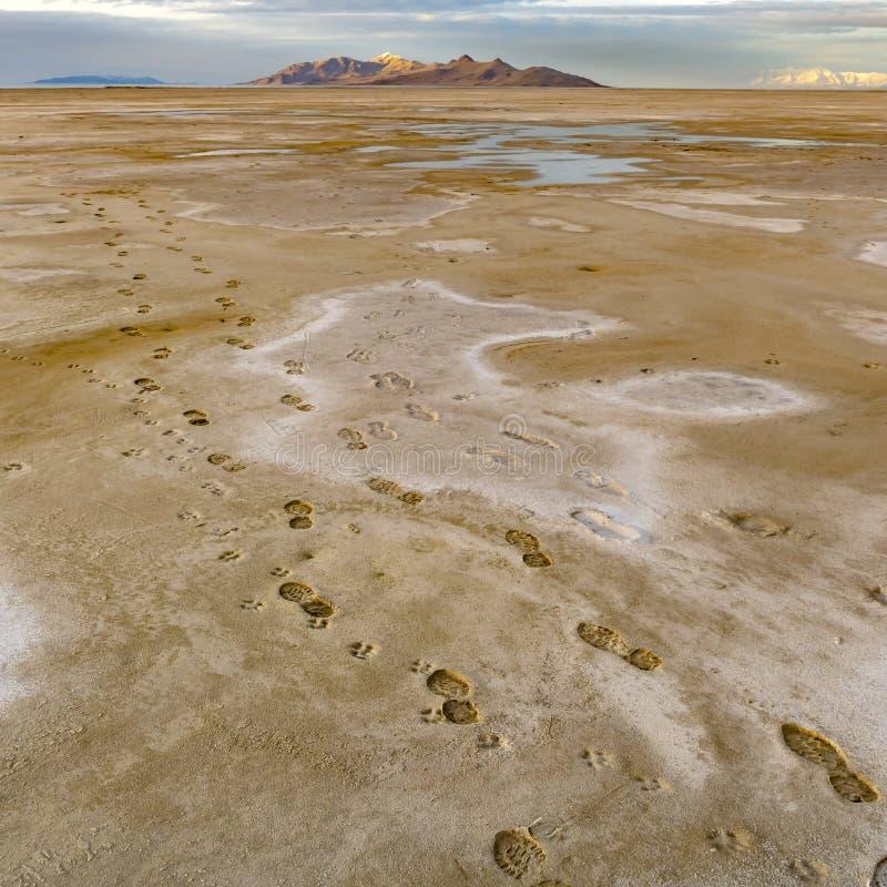 Vierkante Voetafdrukken van een mens en een hond die op de bruine zandige kust van een meer wordt gestempeld royalty-vrije stock afbeeldingen