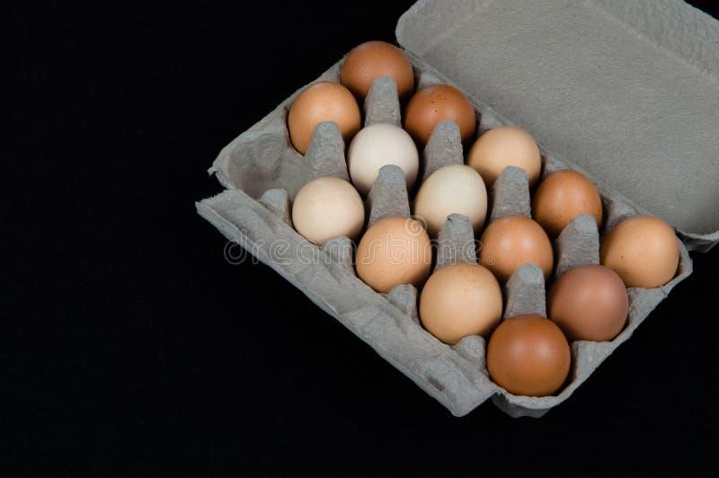 Vierzehn Hühnereien in einem Kartonkasten, lokalisiert auf schwarzem Mattenhintergrund stockfotografie