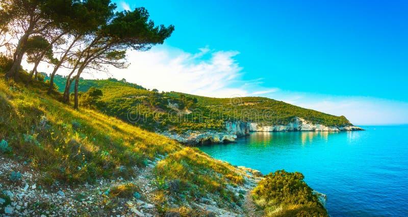 Vieste, de rotsachtige kust van Gargano en bomen, Apulia, Italië royalty-vrije stock fotografie