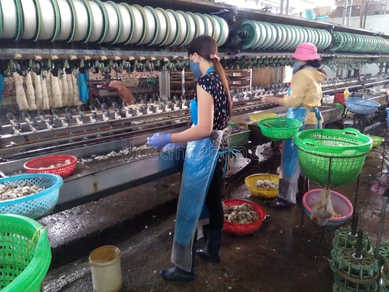 Vietnã, Dalat-7 de dezembro de 2019 Trabalhadores da fábrica de seda no Vietname fotos de stock royalty free