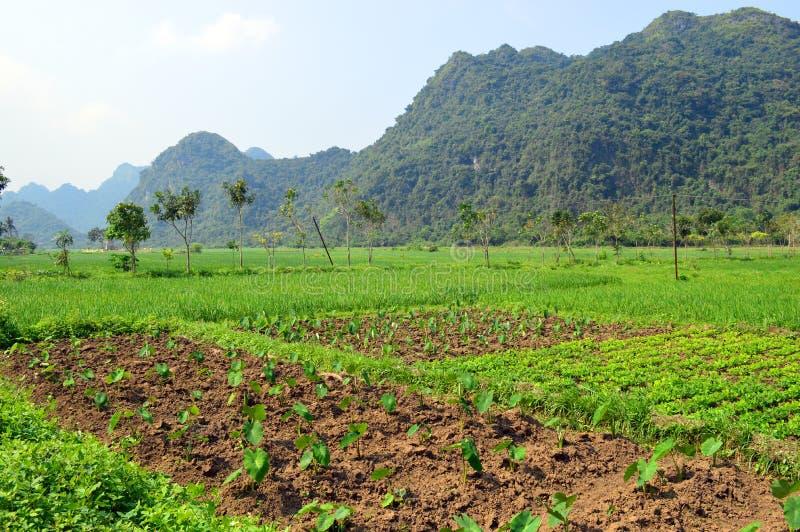 Vietnam - bahía larga de la ha - granja de Cat Ba Island - de la comunidad de Bhaya - Viet Hai imágenes de archivo libres de regalías