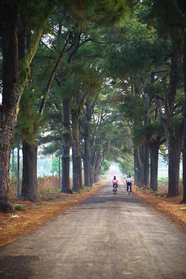 Vietnam countryside landscape with children cycling to school on soild road along lines of tree.  stock photo