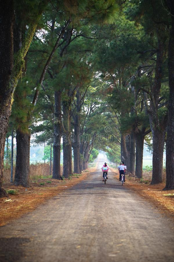 Vietnam countryside landscape with children cycling to school on soild road along lines of tree.  royalty free stock image