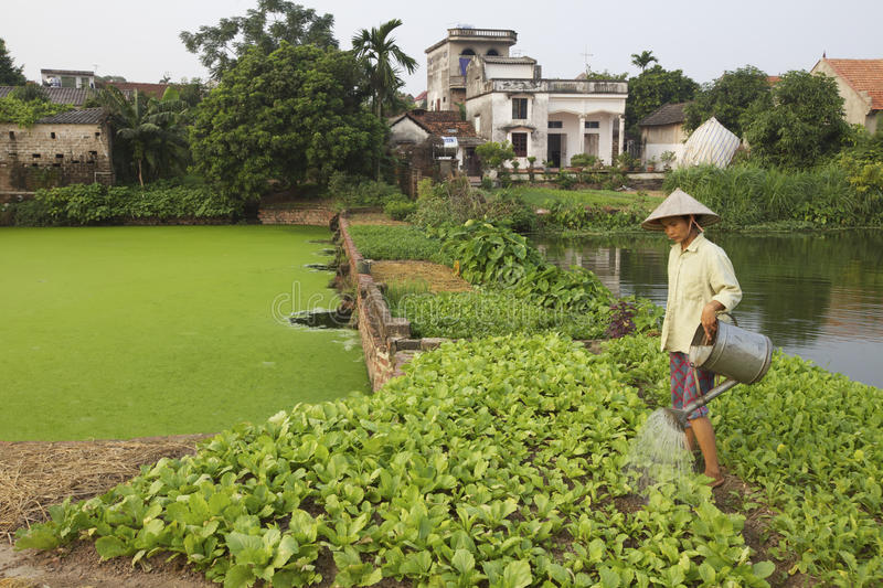 Download Vietnam Farmer editorial photography. Image of watering - 25210242