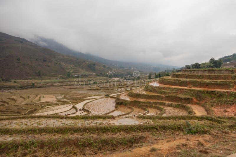 vietnam Gisements de riz et terrasses de riz dans Sapa images stock
