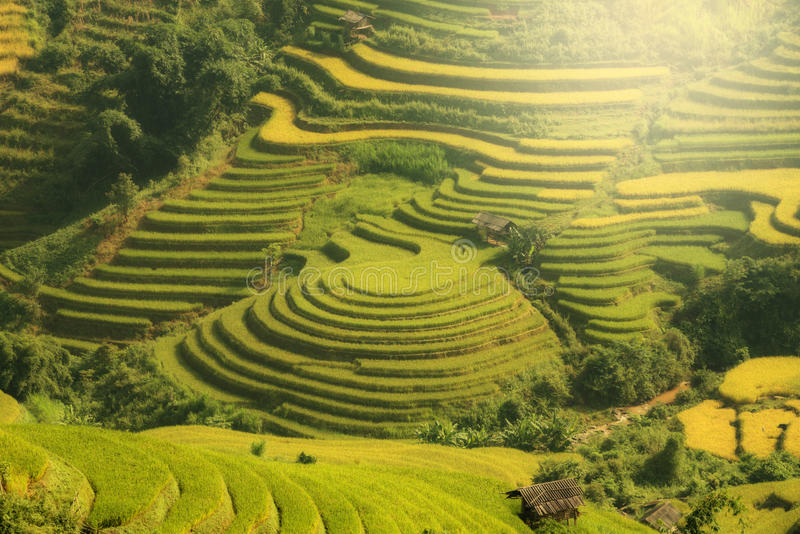 VIETNAM Landscape rice terrace on the mountain of mu cang chai V stock photos