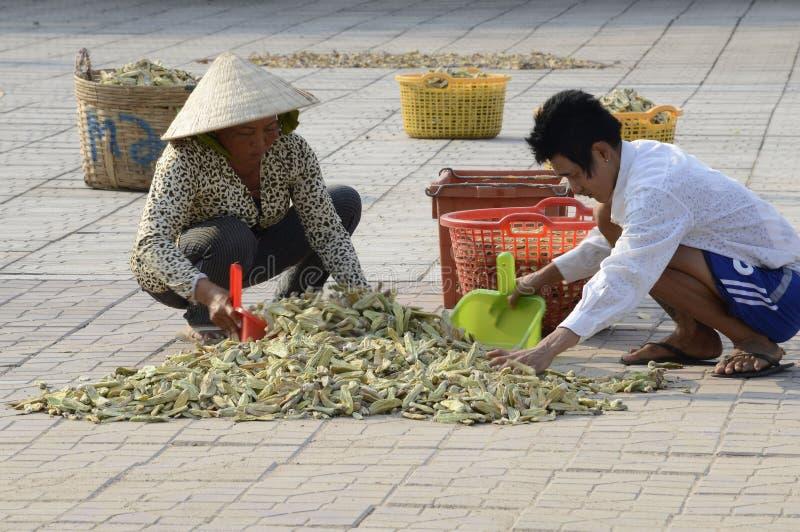 Vietnam lokaler som torkar örter på gatan arkivfoton