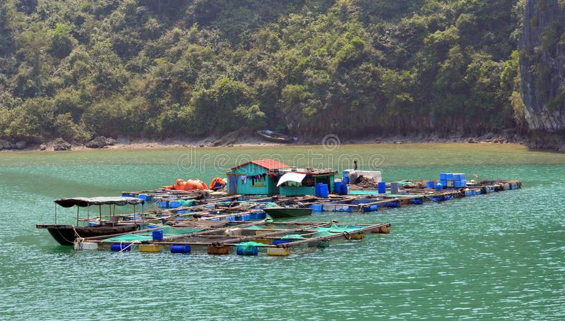 Vietnam - mummel skälla länge - större fisklantgårdar - royaltyfria foton