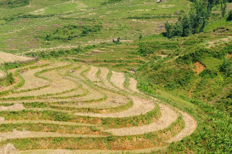 VIetnam - Sapa Rice Paddy royalty free stock photos