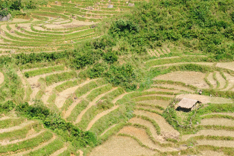 VIetnam - Sapa Rice Paddy stock photos