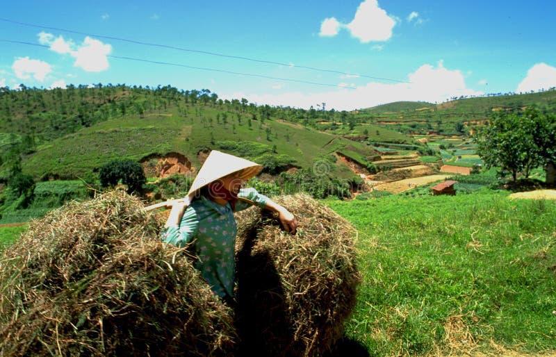 Vietname: Trabalho das mulheres do fazendeiro resistente nos campos na cidade de Dalat fotografia de stock royalty free