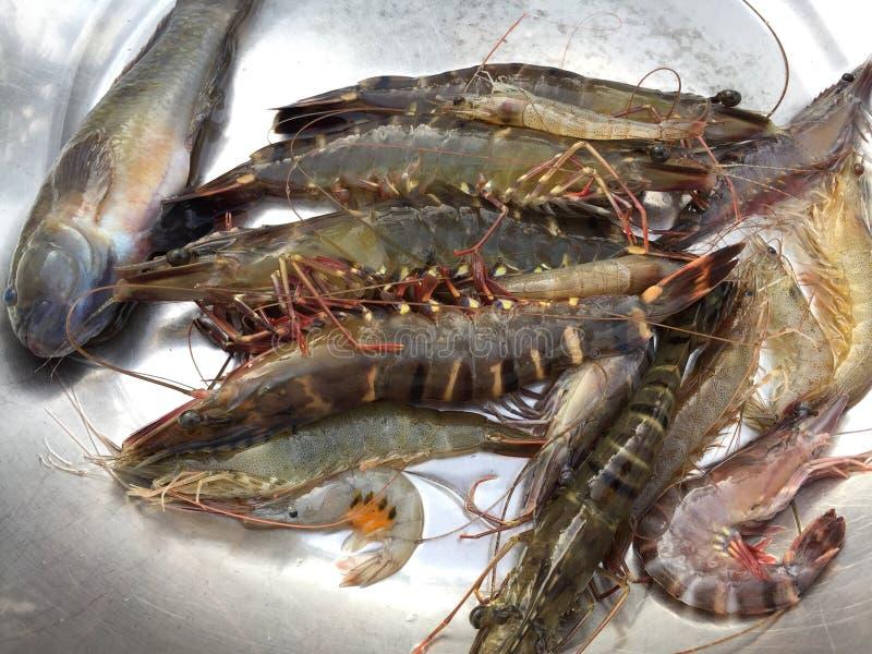 The Vietnamese black tiger shrimp, Penaeus monodon. Vietnamese black tiger shrimp, Penaeus monodon stock images