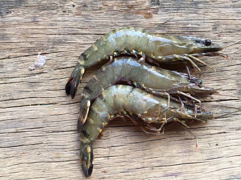 The Vietnamese black tiger shrimp, Penaeus monodon. Vietnamese black tiger shrimp, Penaeus monodon royalty free stock image