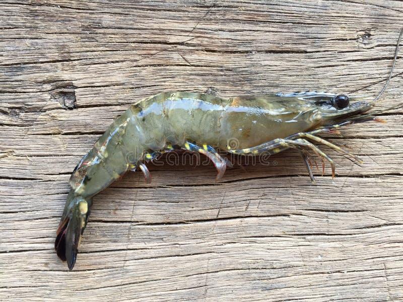 The Vietnamese black tiger shrimp, Penaeus monodon. Vietnamese black tiger shrimp, Penaeus monodon stock image