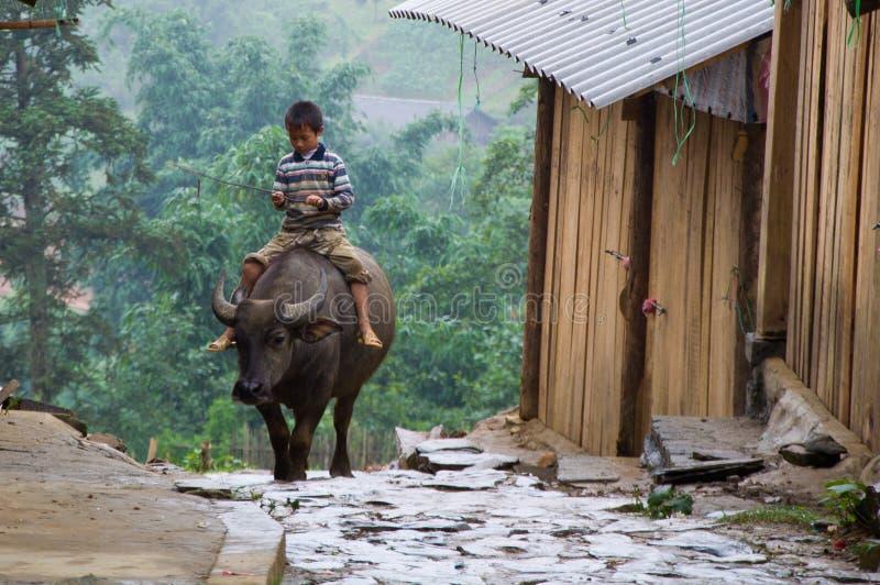 Vietnamese boy riding a buffalo stock photos