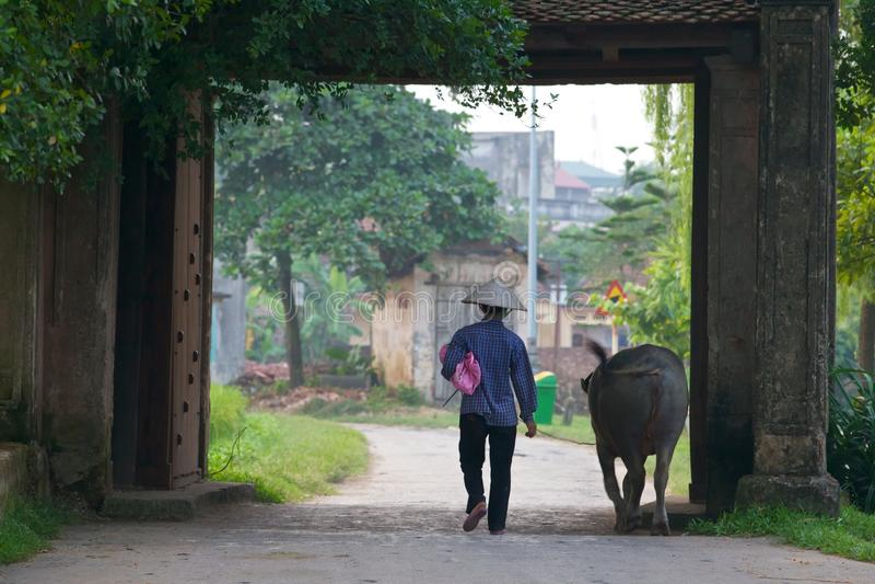 Vietnamese Farmer With Water Buffalo Editorial Stock Photo