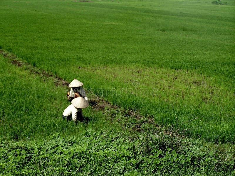 Vietnamese farmers royalty free stock image