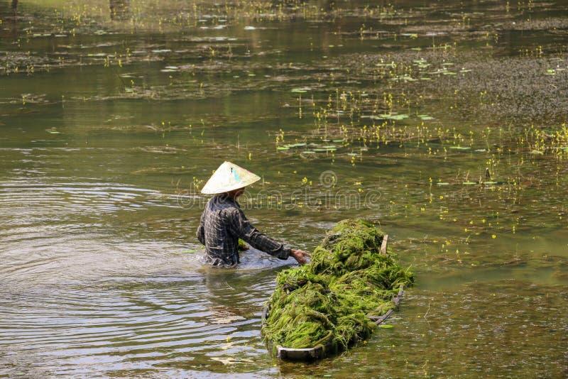 Vietnamese fisherman cleans algae pond royalty free stock image