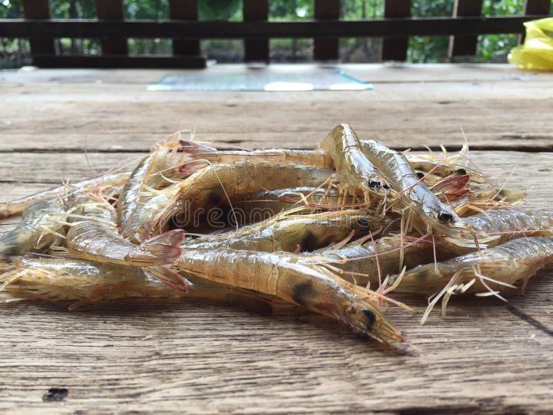 The Vietnamese greasyback shrimp or sand shrimp, Metapenaeus ensis. Vietnamese greasyback shrimp or sand shrimp, Metapenaeus ensis royalty free stock photo