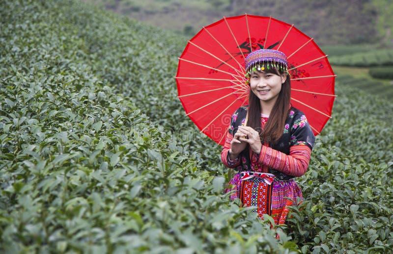 Vietnamese Hmong minority ethnic girl in traditional costume picking tea bud royalty free stock photos