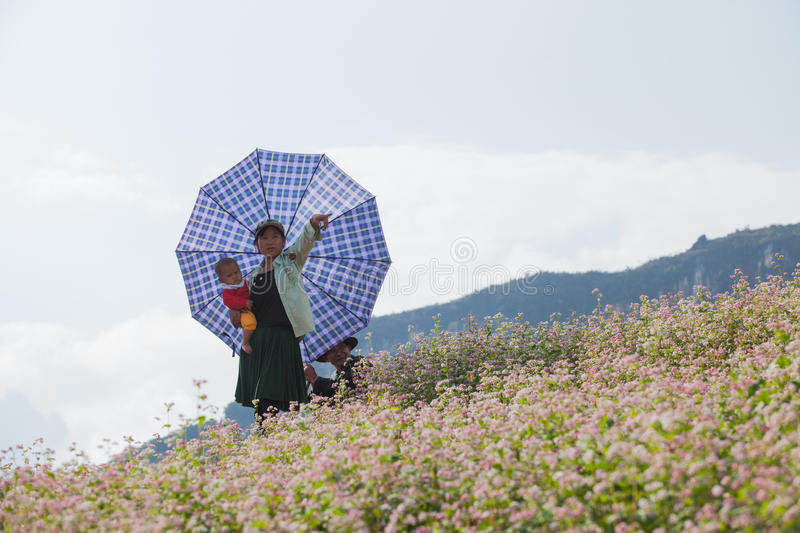 Vietnamese Hmong minority family taking a rest on purple flower stock photography