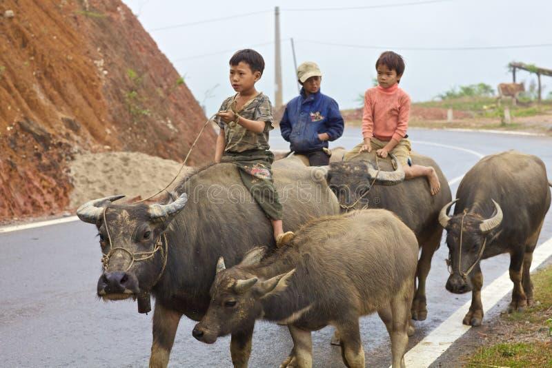 Vietnamese Kinderen die Waterbuffel berijden royalty-vrije stock afbeelding