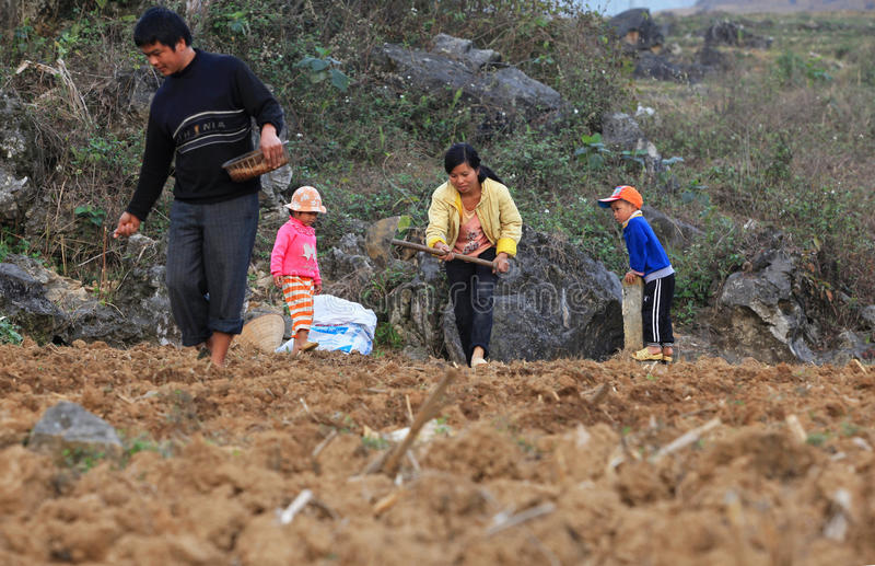 Vietnamese minderheidsfamilie die een nieuw seizoen van graan op het gebied beginnen stock foto