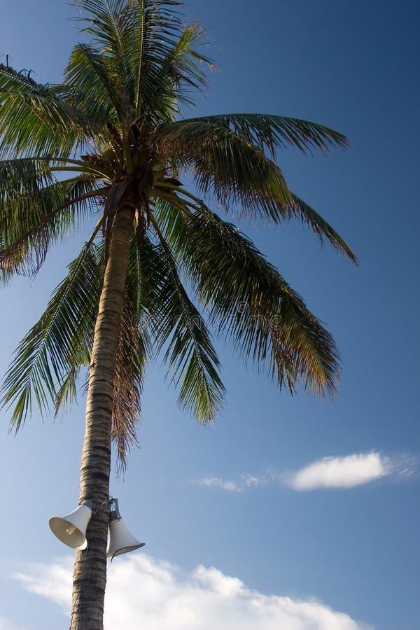 Vietnamese palm met megafoon stock fotografie