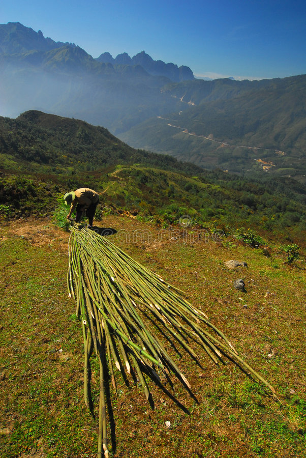 Vietnamese peasant in mountain stock photos