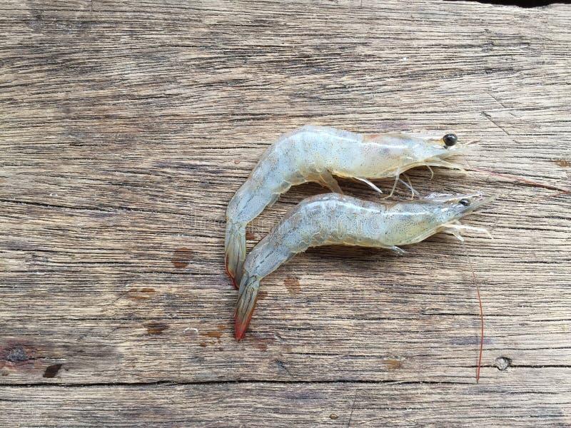 The Vietnamese whiteleg shrimp, Litopenaeus vannamei. Vietnamese whiteleg shrimp, Litopenaeus vannamei royalty free stock photo