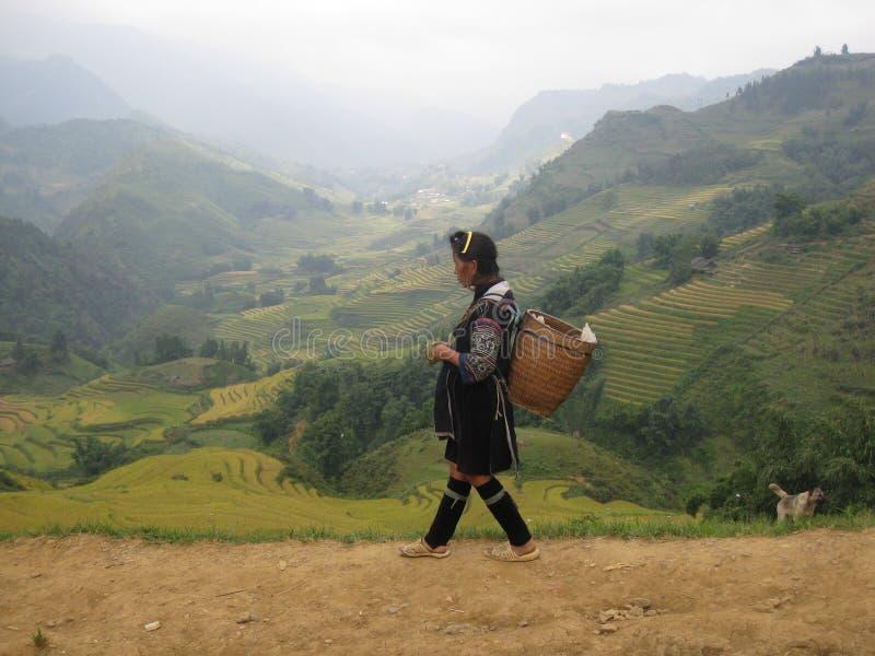 Vietnamese woman walking on a narrow road of Sapa. A Vietnamese woman walking down the hill in a narrow road of Sapa. Sapa's fields stock photography