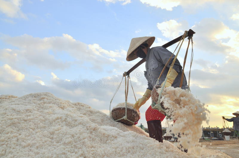 Vietnamese women are burdening hard to collect salt from the extract fields to the storage fields. NINH HOA, VIETNAM - MARCH 2, 2012: Vietnamese women are royalty free stock image