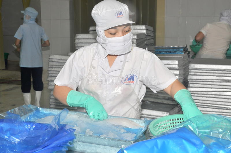 Vietnamese workers are sorting pangasius fish after filleting in a seafood processing plant in the mekong delta stock photography